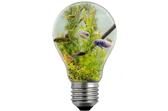 ryby v žárovce